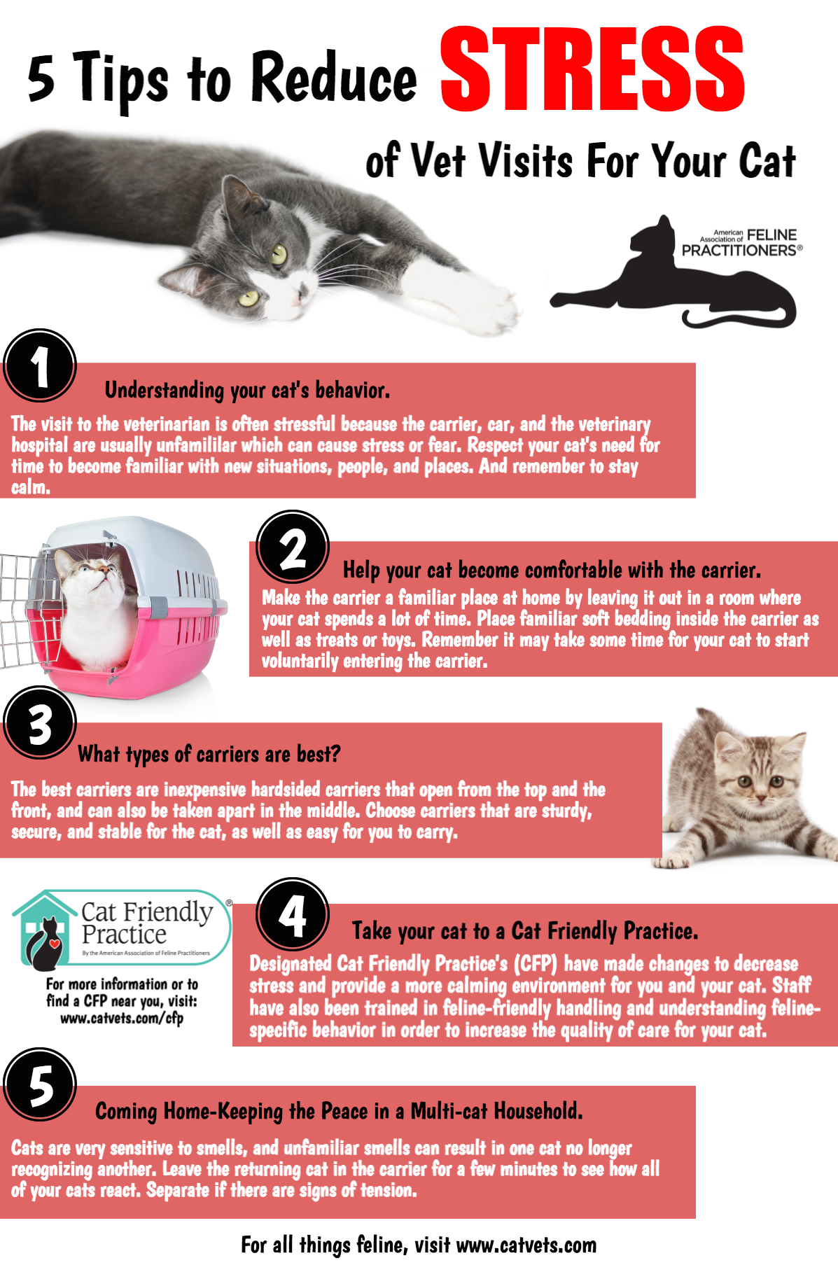 5 Tips to Reduce Stress of Vet Visits for Your Cat | Bloor ...