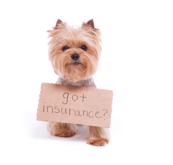 Got Insurance?