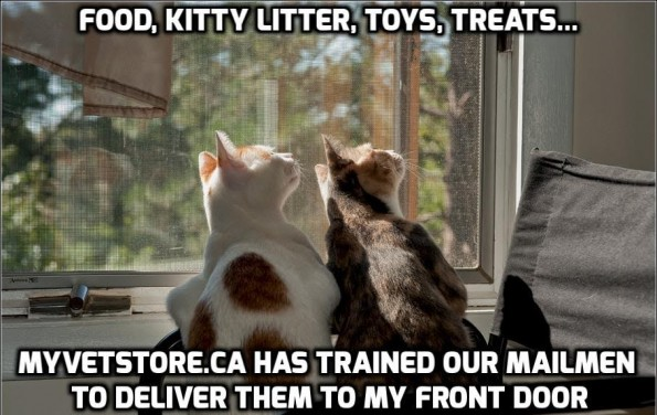 webstore kitties